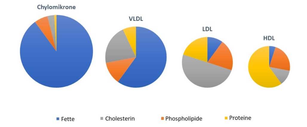 Lipoproteine des Menschen