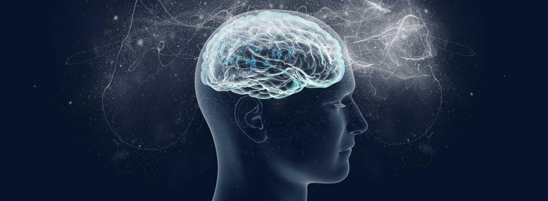 neuronale Plastizität